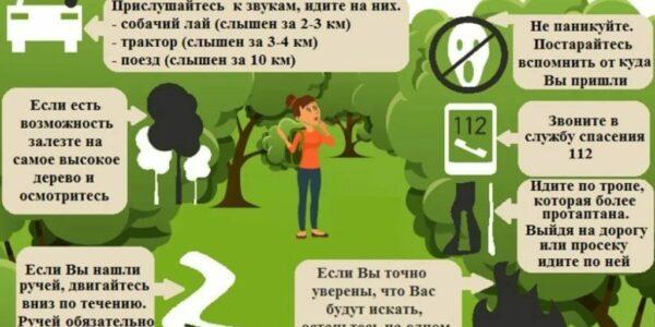 Правила поведения в лесу в летний период